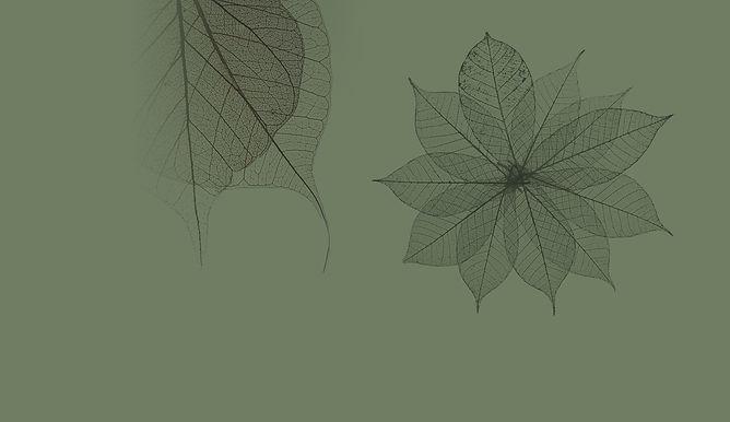 רקע של עלים, יגאל קוטין רפואה טבעית