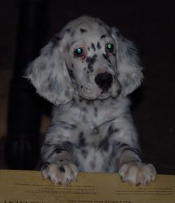 Dot puppy2