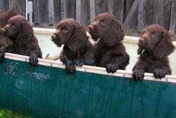 4 in canoe