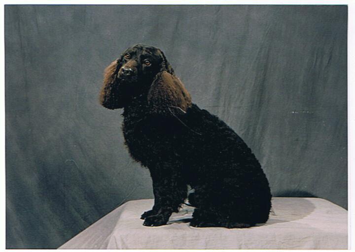 Levi portrait
