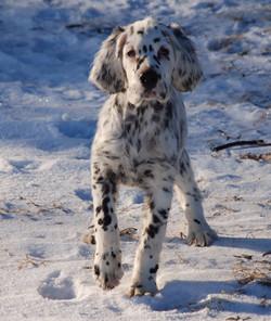 dottie puppy