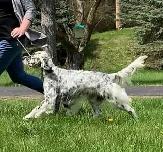 Sassy gaiting May 2020.jpg