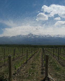 lavinoteca vinos argentinos uruguayos ch
