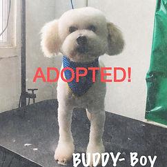 Buddy_edited.jpg