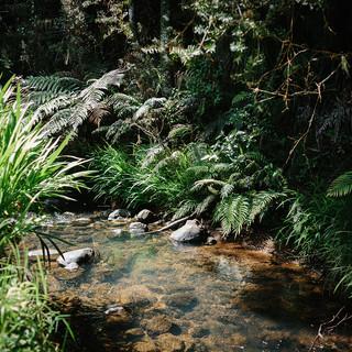 Kauri Coast Estate