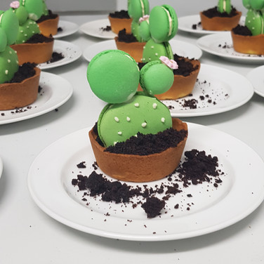 Edible Cactuses | Hubands Energy