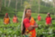 Canva - Women in a Tea Plantation in Ind
