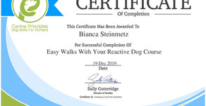 Walking with a Reactive Dog