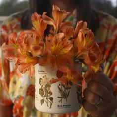 Flores de otoño en Punta Colorada.