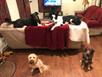 A Couple Pups Enjoying The Great Off Leash Dog Life #goldlife