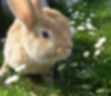 Rabbit Boarding - Angelcare Pet Vet