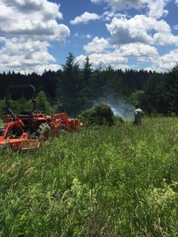 clearing fields
