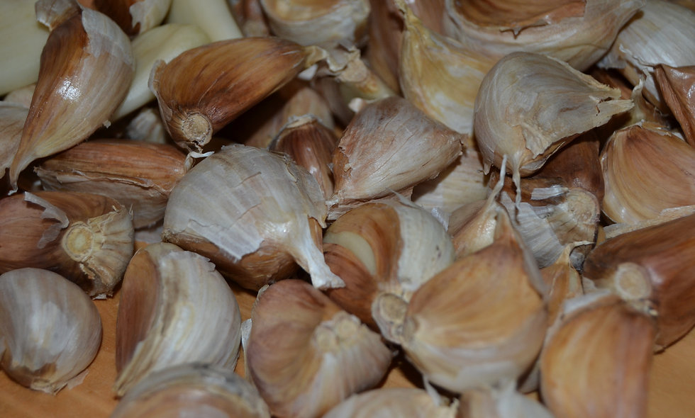 German Red Seed Stock X-Large Bulbs (by the lb)