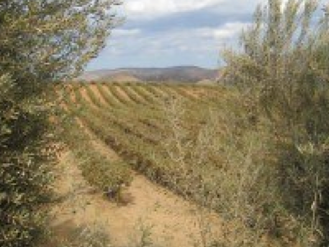 Guadalupe Valley Wineries