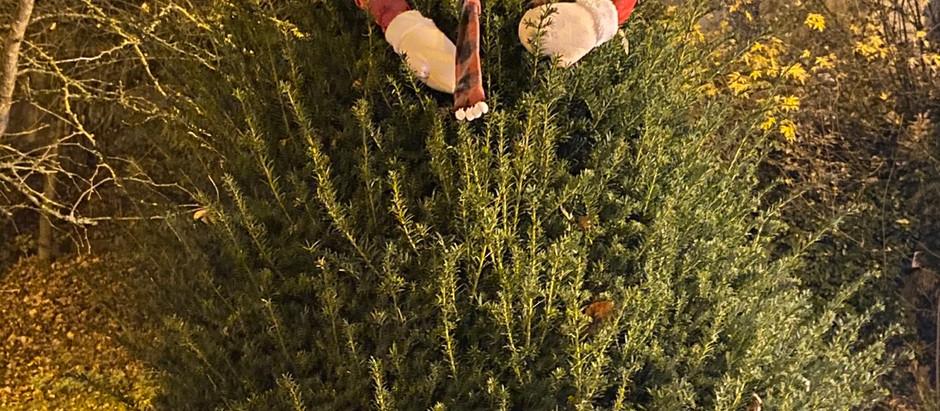 Vol décoration Noël