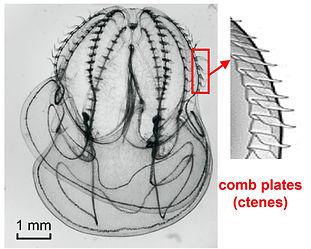 Figure01_v1.jpg