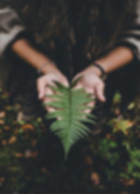 fern in hands.jpg
