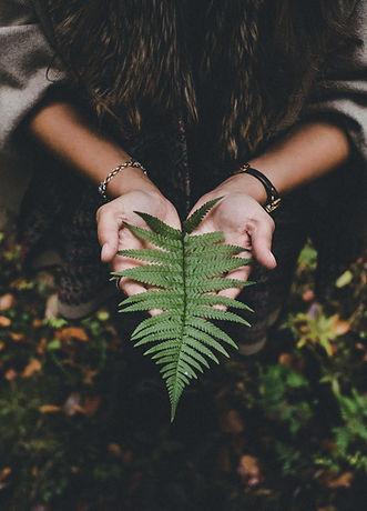 fern in hands.jpg