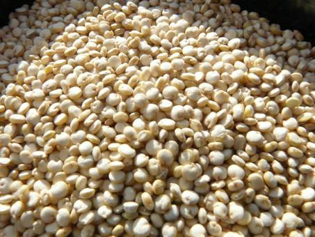 Le quinoa, une merveille pour la santé