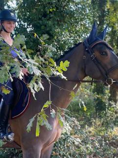 cheval forêt