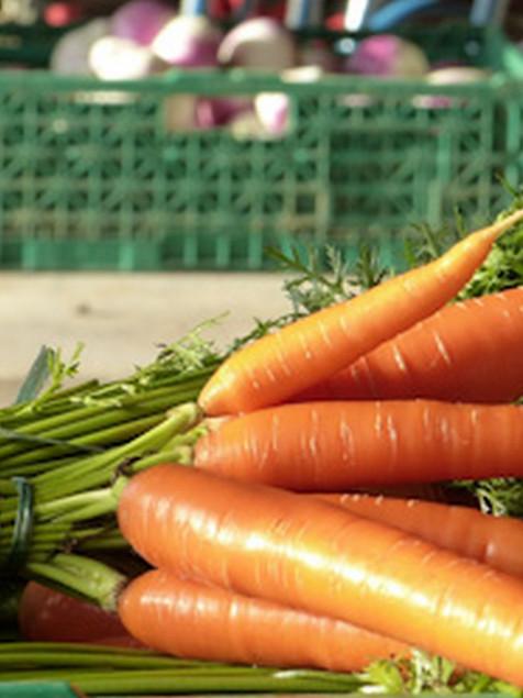 carottes (Copier).jpg