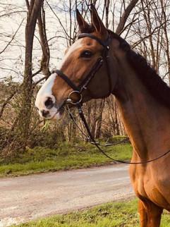 cheval sur une route