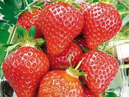Mai 2021 : Les fraises sont en vente à la boutique