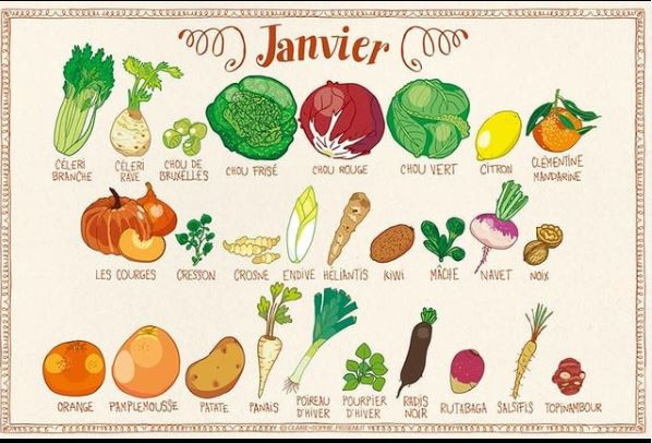 Janvier, fruits et légumes de saison, illustrations de Claire Sophie Pissenlit
