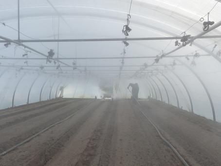 Novembre 2020 : La désinfection de la terre à la vapeur