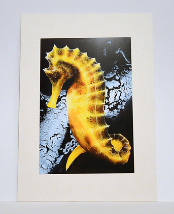 signed seahorse print