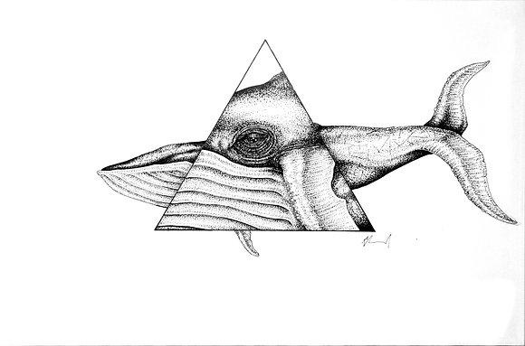 aquatic geometry