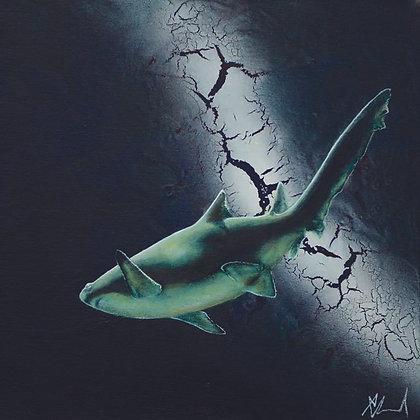 21cm sq. shark print