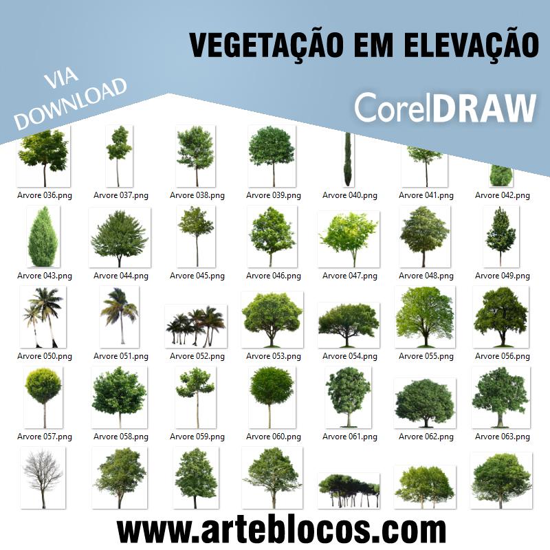 Vegetação em elevação