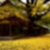 虚空蔵菩薩堂と大イチョウ.jpg