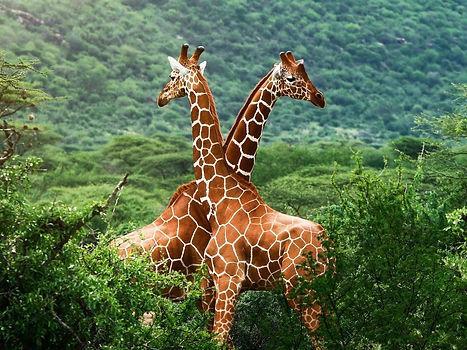 kartinki-afrika-2.jpg