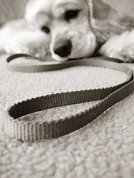 Jak pomóc psu przetrwać noc Sylwestrową?