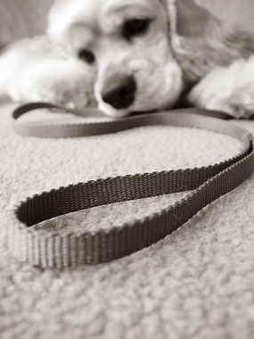 Pup and dog lead