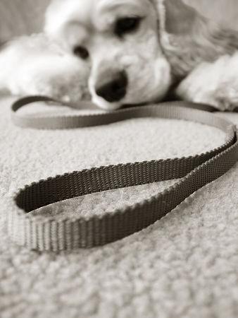Patient Pawz Dog Training