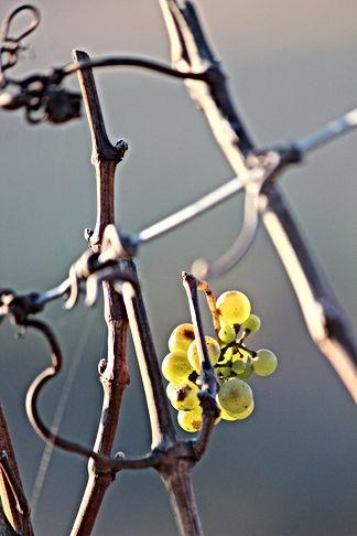 Vignoble de Pommard en Bourgogne B&B Edenswing Chambres d'hôtes de charme avec piscine à Beaune Côte d'Or