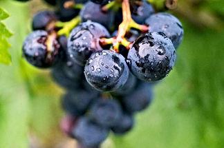 Vignes en Bourgogne  B&B Edenswing Chambres d'hôtes de charme avec piscine à Beaune