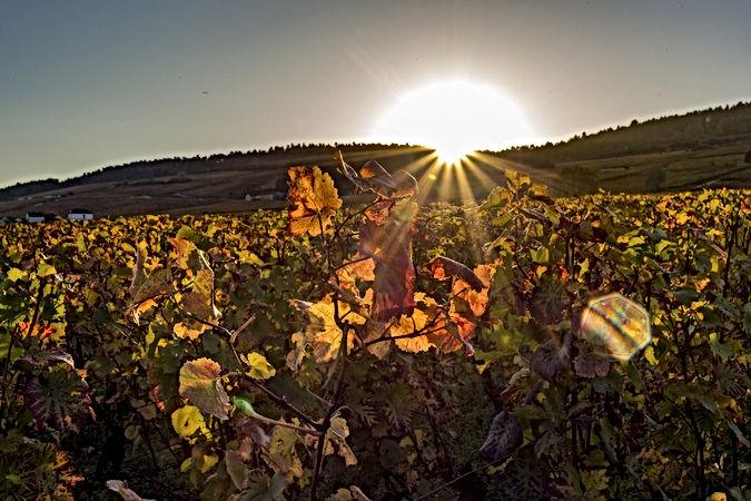 Célèbres vignobles prestigieux de Meursault, B&B Edenswing Chambres d'hôtes de charme avec piscine à Beaune en Bourgogne