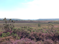 Corfe from Arne