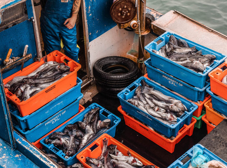 Blue Cod catch