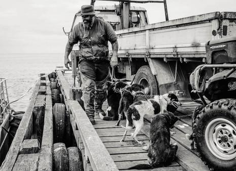 Dog Gang