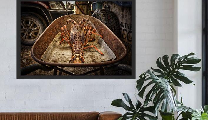 Chatham Island Crayfish