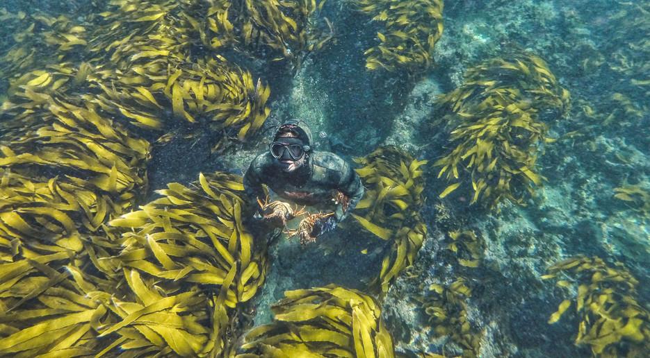 Underwater Office