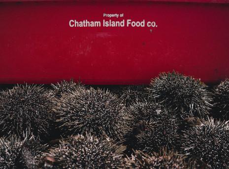 Chatham Island Food Company .jpg