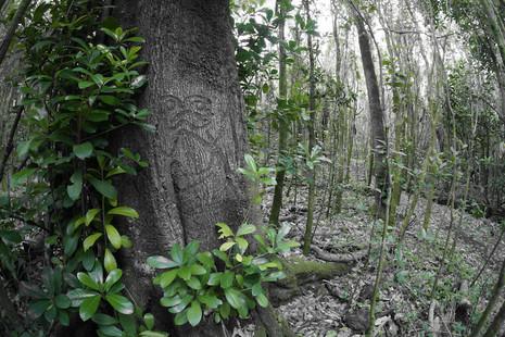 Moriori Tree Carvings