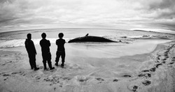 Ocean Mail Whale