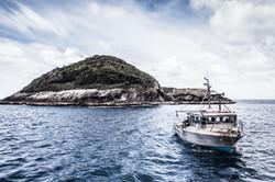 Spider Island Chatham Islands
